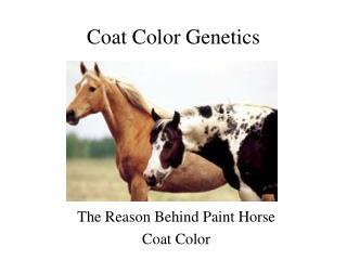 Coat Color Genetics