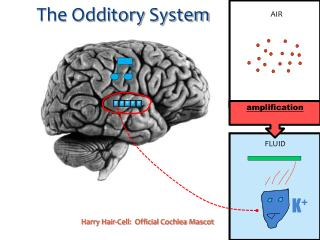 The  Odditory  System