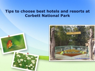 Tips to choose best hotels Corbett National Park