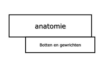 anatomy botten