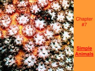 Chapter #7 Simple Animals
