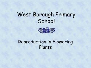 West Borough Primary School