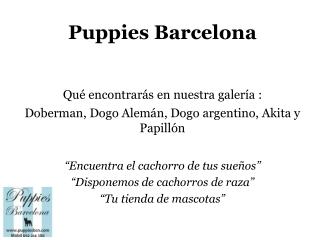 Puppies Bcn: imágenes 3