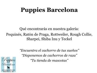 Puppies Bcn: imágenes 4