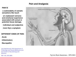 Pain and Analgesia