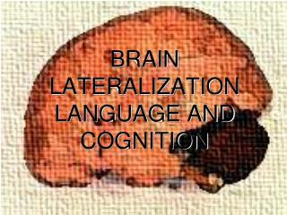 BRAIN LATERALIZATION LANGUAGE AND COGNITION