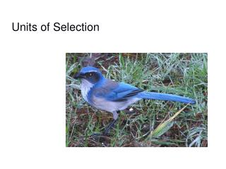 Units of Selection