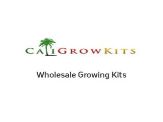 Caligrowkits - Mushroom Growing Kits