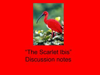 """The Scarlet Ibis"" Discussion notes"