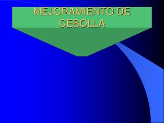 MEJORAMIENTO DE CEBOLLA