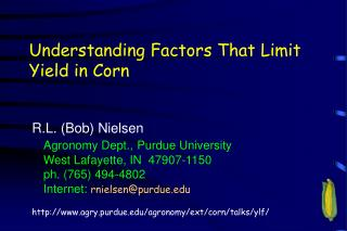 Understanding Factors That Limit Yield in Corn