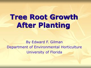 Tree Root Growth After Planting
