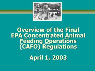 Overview of the Final EPA  C oncentrated  A nimal  F eeding  O perations (CAFO) Regulations April 1, 2003