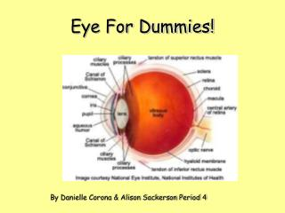 Eye For Dummies