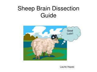 Sheep Brain Dissection Guide
