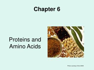 proteins and amino acids