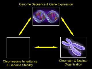 Genome Sequence  Gene Expression