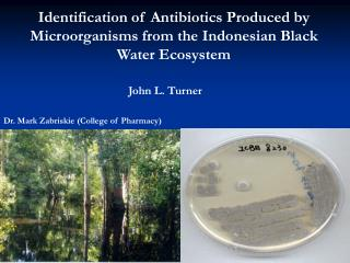 Identification of Antibiotics Produced by Microorganisms from the Indonesian Black Water Ecosystem