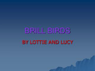 Brill Birds