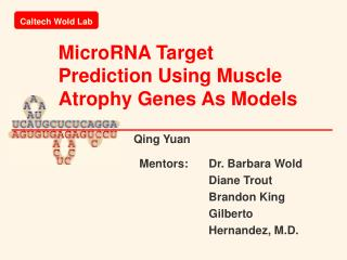MicroRNA Target Prediction Using Muscle Atrophy Genes As Models