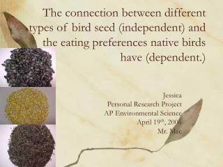 The connection between different types of bird seed (independent) and the eating preferences native birds have (dependen