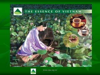 THE DEVELOPMENT OF VIETNAM TEA INDUSTRY
