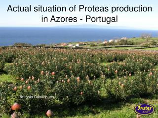 Actual situation of Proteas production in Azores - Portugal