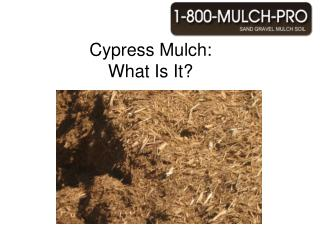cypress mulch: what is it?