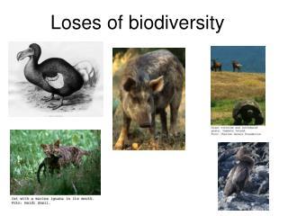 Loses of biodiversity
