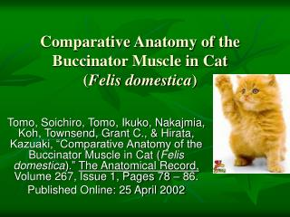 Comparative Anatomy of the Buccinator Muscle in Cat ( Felis domestica )