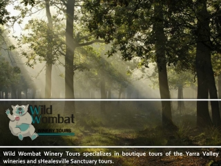Wild Wombat Winery Tours