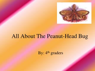 All About The Peanut-Head Bug