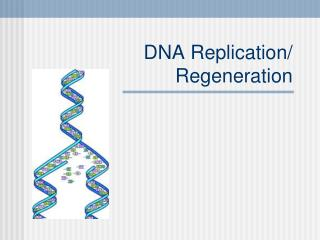 DNA Replication/ Regeneration