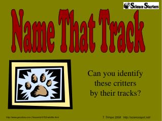 Can you identify  these critters  by their tracks?