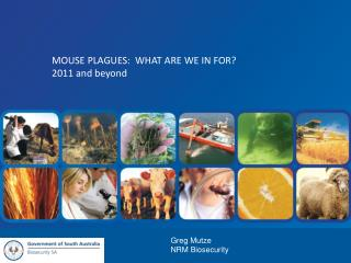 Mouse Plagues:  WHAT ARE WE IN FOR? 2011 and beyond