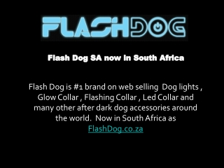 Dog lights, Glow Collar, Flashing Collar from FlashDog now i