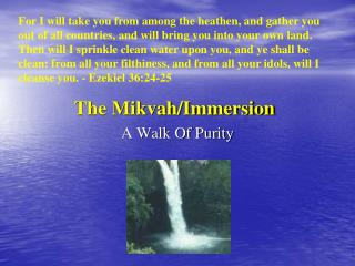The Mikvah/Immersion