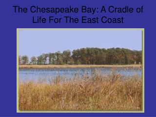 The Chesapeake Bay: A Cradle of Life For The East Coast