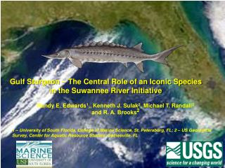 Gulf Sturgeon – The Central Role of an Iconic Species in the Suwannee River Initiative