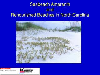 Seabeach Amaranth and  Renourished Beaches in North Carolina