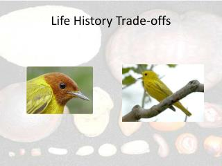 Life History Trade-offs