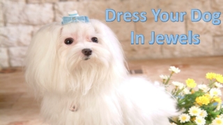 Dress Your Dog In Jewels