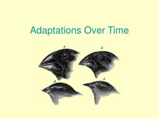 Adaptations Over Time