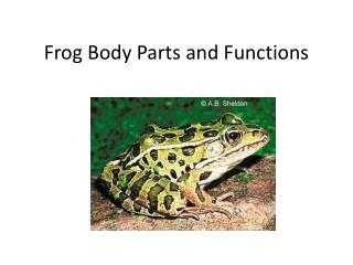 Frog Body Parts and Functions