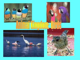 Animal Kingdom: Birds