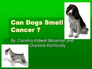 Can Dogs Smell Cancer ?