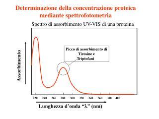 Determinazione della concentrazione proteica mediante spettrofotometria
