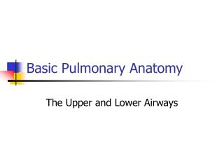 Basic Pulmonary Anatomy