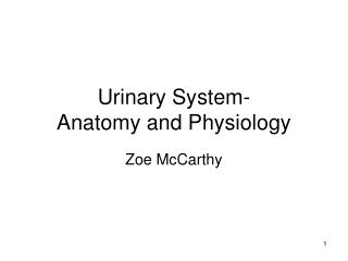 Urinary System- Anatomy and Physiology