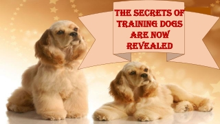 The Secrets of Training Dogs Are Now Revealed